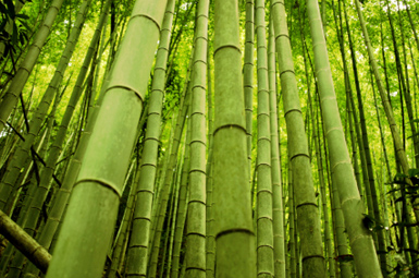 bamboo is a natural, renewable alternative to plastic